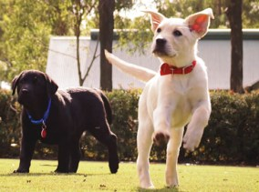 Charity Fundraising Film Guide Dogs
