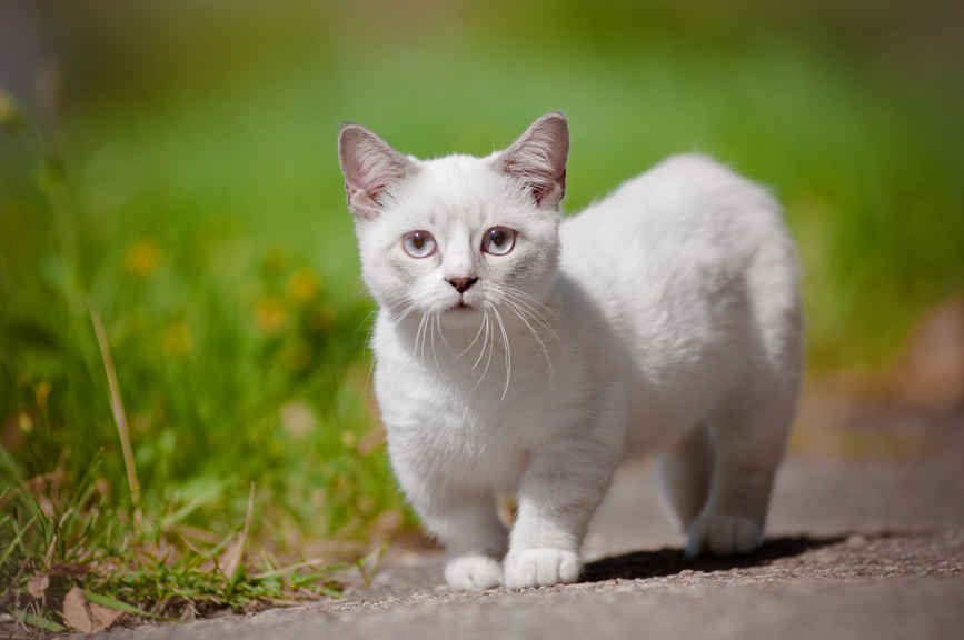 10 Cutest Cat Breeds - Flokka