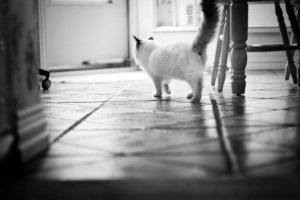 Teddy ©2010 Diane Arnaout