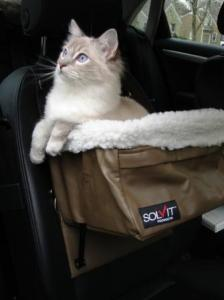 Trigg in Pet Booster Seat