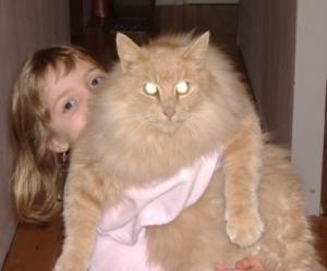 Tammy's Daughter, Emma, And Cat, Gibson