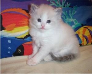 Raina as a kitten
