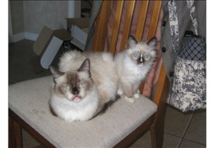 Rose and Dallas as a Kitten