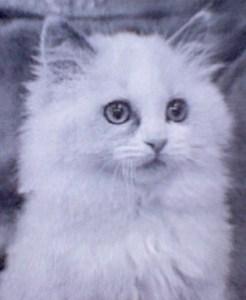 Sunny as a Kitten in Omaha, NE
