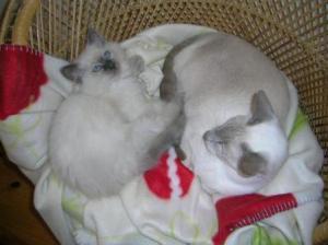Basil & Abbie
