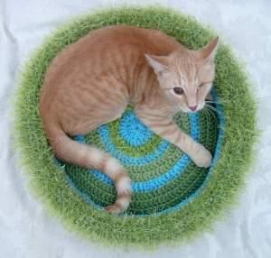 Lynn's Cat, Cashew