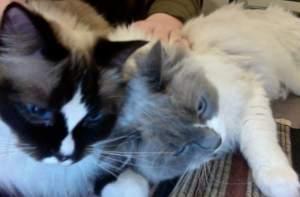 Rufus and Druscilla