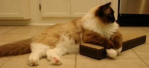 Charlie on the Ree Yong Copenhagen Cat Scratcher