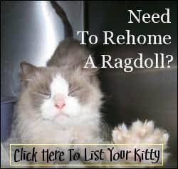 Rehome Ragdoll