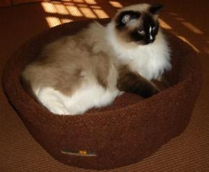 Charlie in the Alpha Pooch Siesta Bowl Bed
