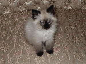 Angel as a kitten