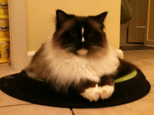 Charlie on Crater Dot Cat Bed