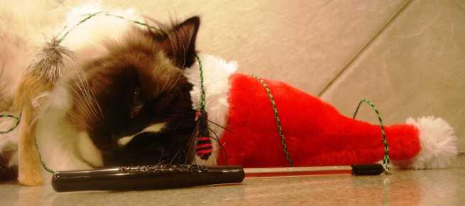 Christmas 2011 Giveaway – Neko Flies