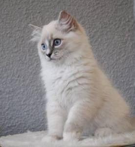 Smokie 12 weeks old