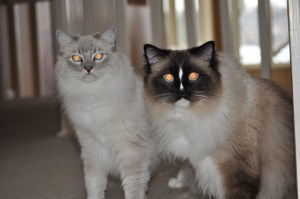 """Trigg and Charlie ask, """"Should we have a forum?"""""""