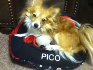 Pico - Linda's Dog