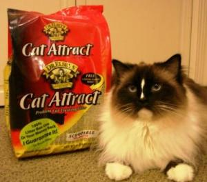 Dr. Elsey's Cat Attract Cat Litter and Charlie