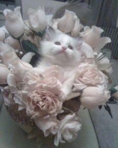 Sergio as a kitten