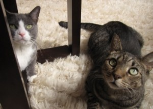 Petie (left) with Kip (right)