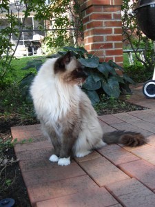 Rags Outside When He Was 16 Years Old