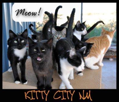 Kitty City NM