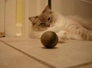 Trigg and Pawbreaker Catnip Ball