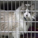 Networking For Ragdoll Rescue