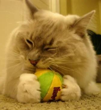 Trigg with Yeowww Catnip Ball