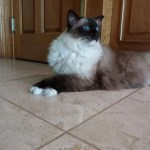 Caymus Crossed Paws