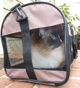 Charlie in the soft sided Petmate Kennel