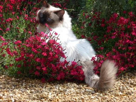 Darcy in the Flowerbed