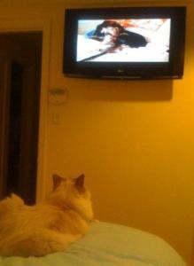 Trigg Watching TV