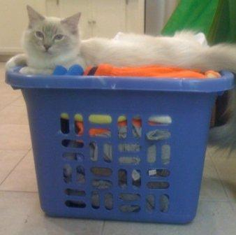 Trigg in a Laundry Basket 3-10-11