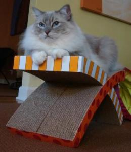 Trigg on the Petstages Easy Life Hammock and Scratcher