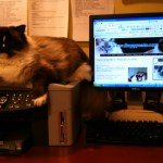 Check Out The Discussions Over on the Floppycats Ragdoll Cat Forum