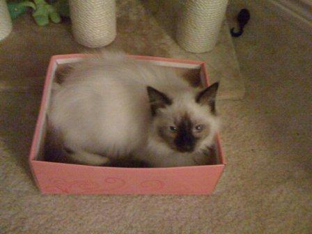 Hank in a Box (again)