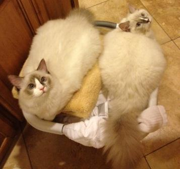 Babsi & J-Cat in Laundry Basket Owned and Cherished by Barbie Heinen!