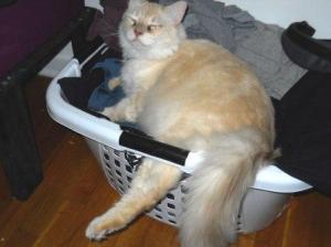 Dexter in a Laundry Basket