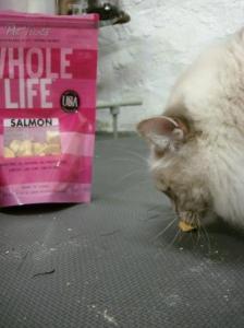 Whole Life Pet Treats Salmon and Trigg