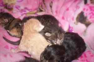 Lilah's kittens