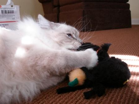 Trigg and Just Cats Catnip Toys