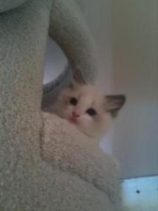 Baby Huxley in Cat Tree