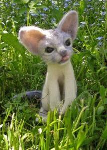 cat Rony