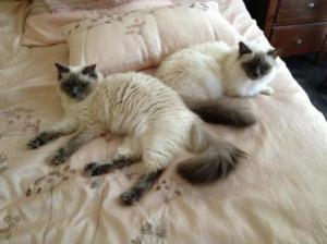 Lulu and Birman Shany