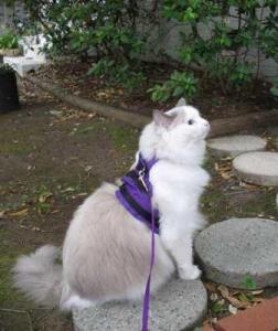 Tessa for a walk