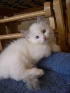 Sweet Tessa at 10 weeks