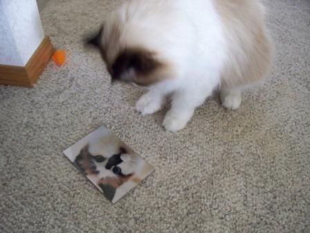 Charlie looking at Maddies photo