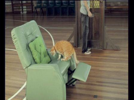 Man opens door and hero cat steals the chair