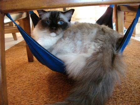 Caymus in Kitty Cradle