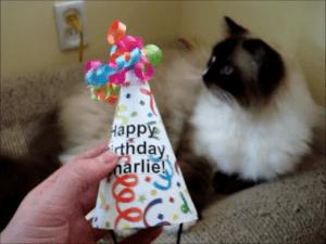 Charlie Birthday Hat